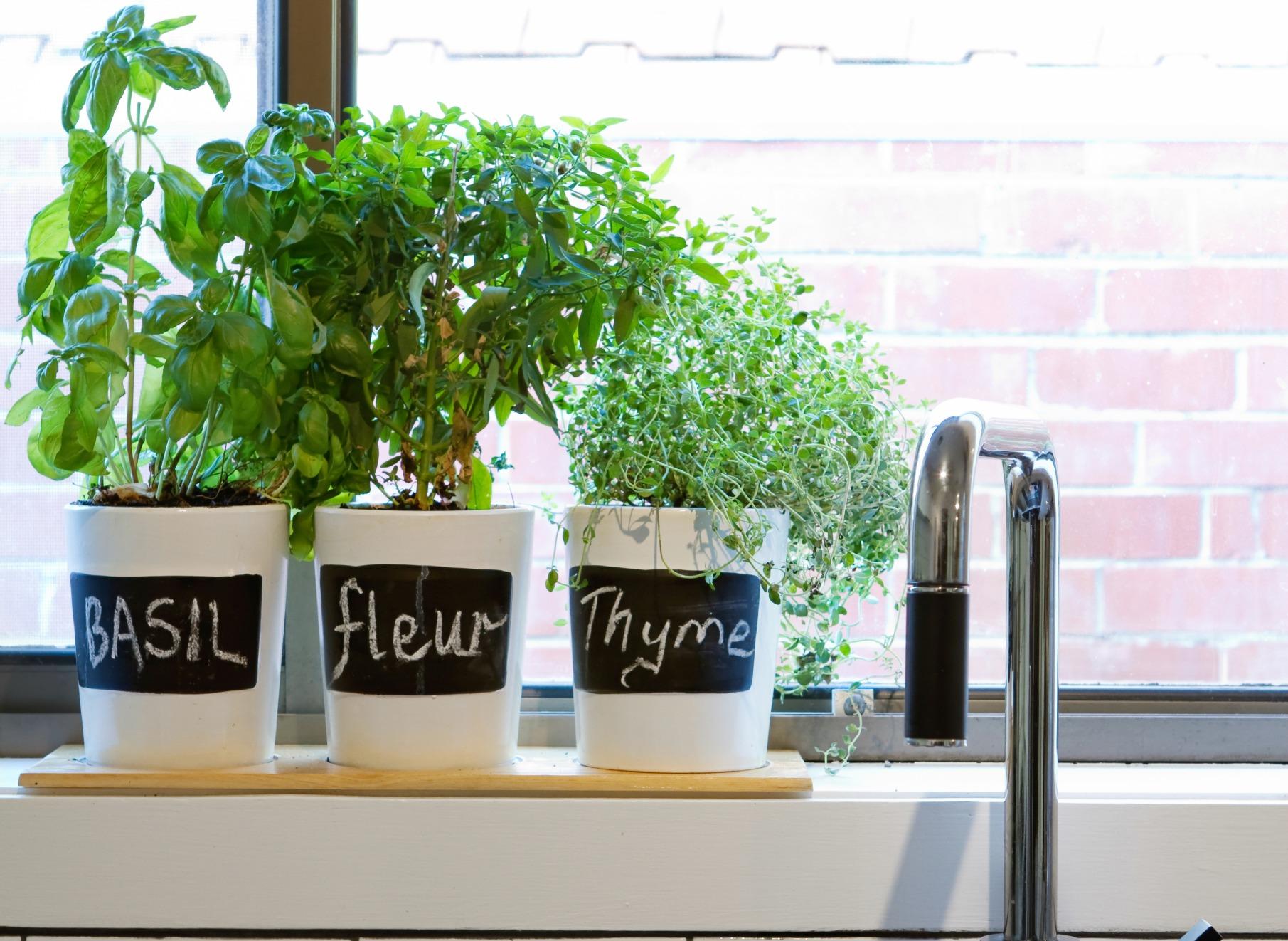 Vertical Kitchen Herb Garden Kitchen Herbs Kitchen Herbs Vertical Herb On Sich