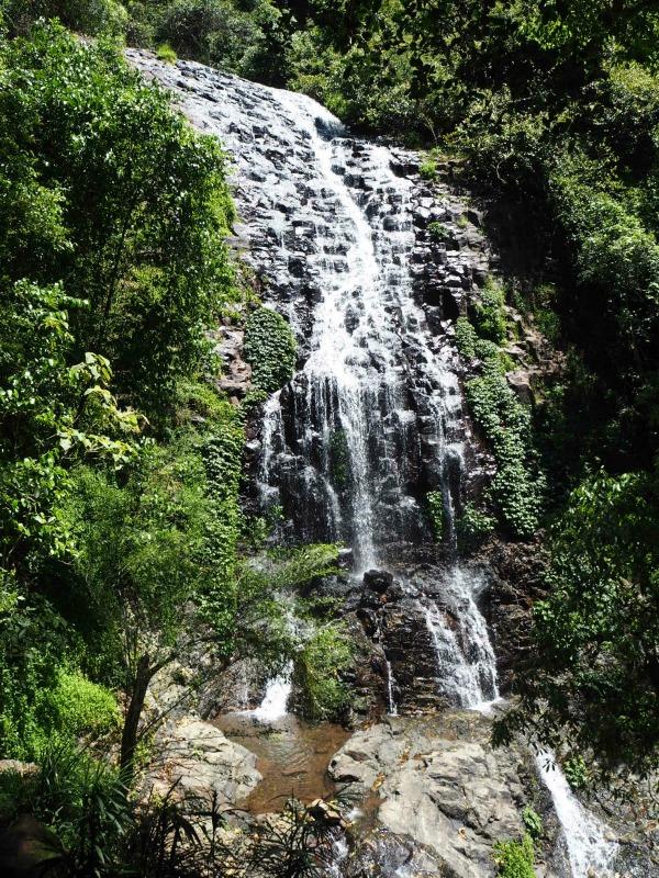 Crystal Shower Falls Dorrigo National Park Coffs Harbour