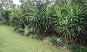 A week of house maintenance gardening