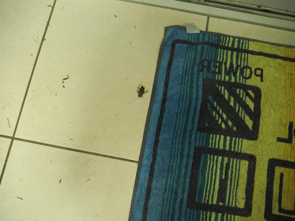 One dead cockroach