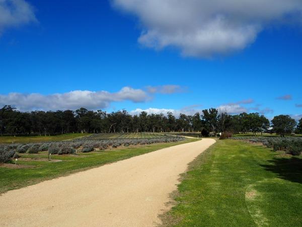 aloomba lavender farm stanthorpe