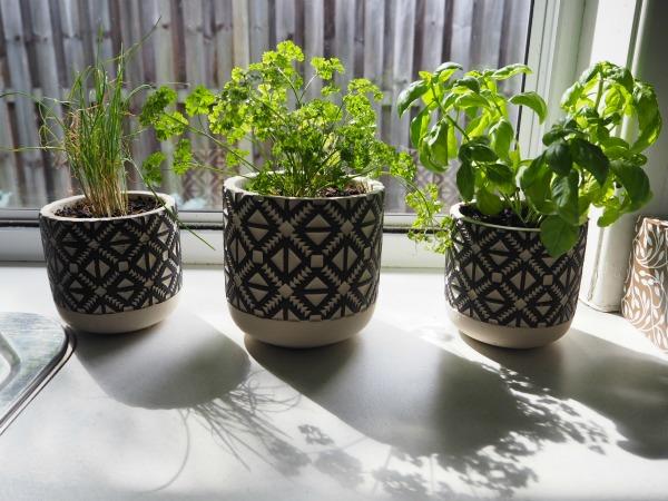herbs indoor kitchen