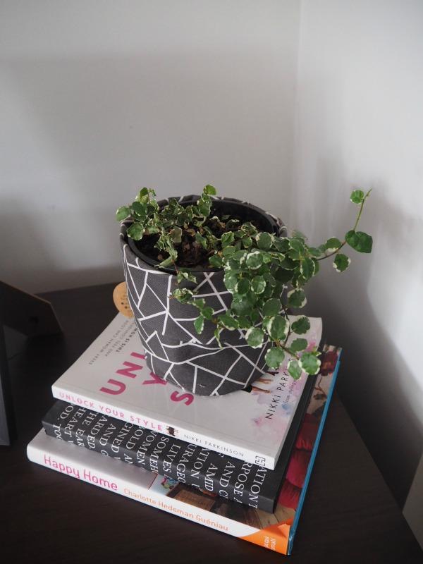 ivy indoor plants
