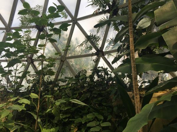 botanic gardens mt coot-tha