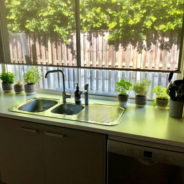 herbs on the kitchen windowsill