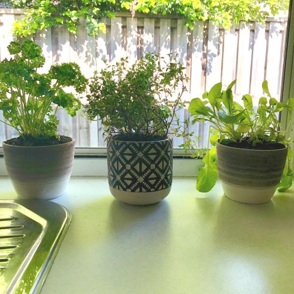 herbs on kitchen windowsill