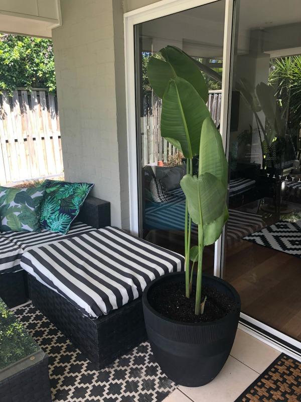 repurposing plants to prevent plumbig problems
