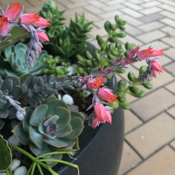 Diy Succulent Potting Mix Australia: How To Make A Succulent Pot