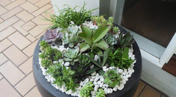 how to make a succulent pot