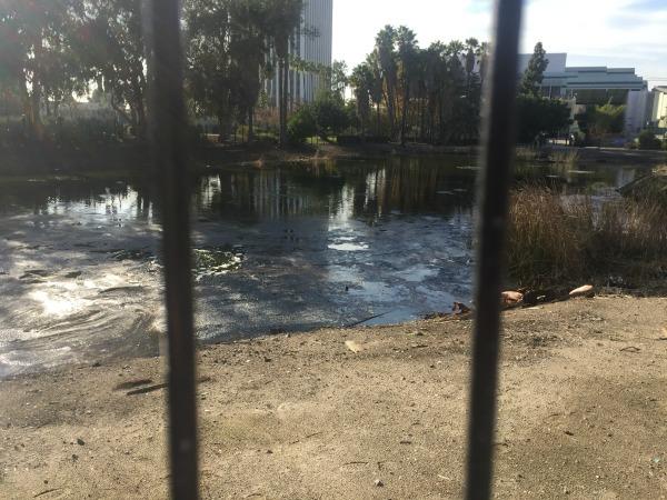 tar pits in LA