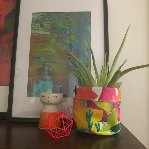 Aloe Vera Best Indoor Plant