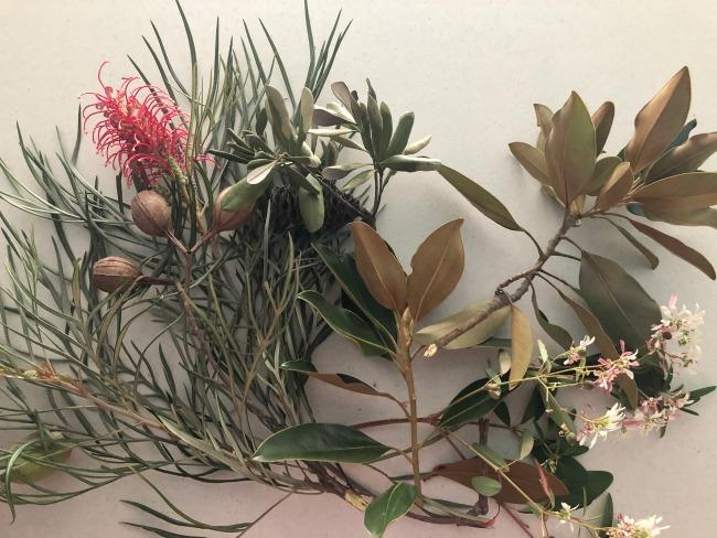 Australian native flowers for an arrangement