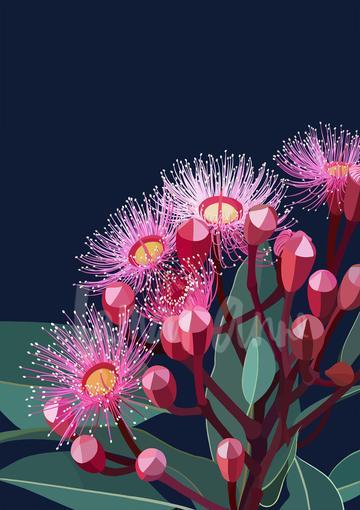 Lamai Anne Eucalyptus Bloom Australian Native Floral Artwork